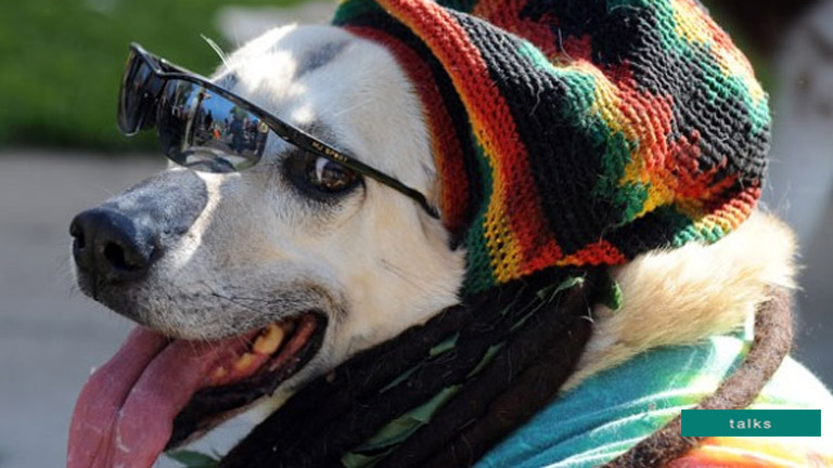 Dogs 'prefer reggae and soft rock' to other music genres