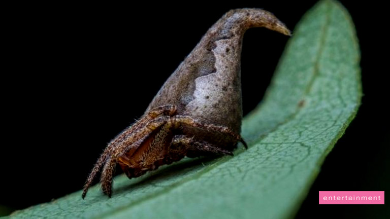 Spider Looks Just Like a Harry Potter Sorting Hat