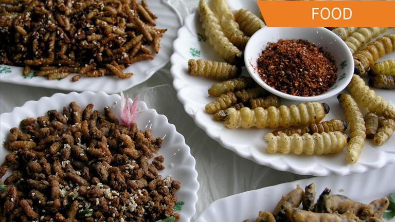 Insects for food Suggested by the U.N.